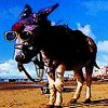 Traditional Blackpool Donkey