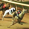 find a place to stay near the greyhound tracks